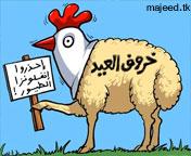 صور خرفان لمسن , رمزيات مسن عيد الاضحي المبارك خروف بيعاني